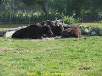 Vogelpark_2015_002