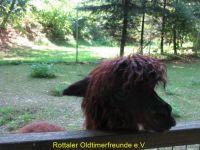 Vogelpark_2015_019