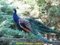 Vogelpark_2015_040