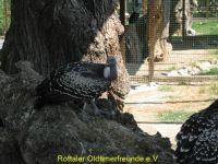 Vogelpark_2015_041