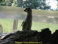 Vogelpark_2015_052