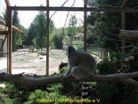 Vogelpark_2015_061