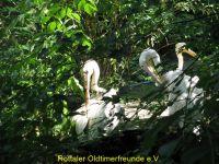 Vogelpark_2015_066