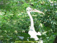Vogelpark_2015_067