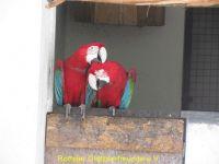Vogelpark_2015_071