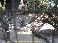 Vogelpark_2015_087